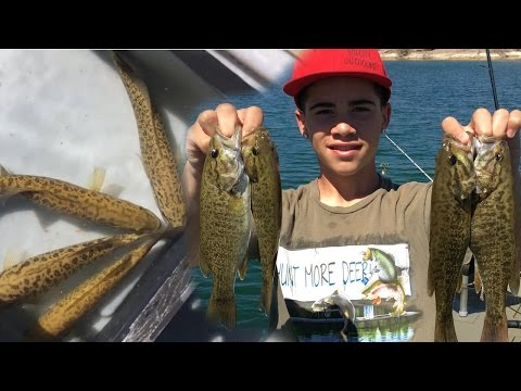 Fishing for Stripers and Bass on The Colorado River in a 2072 Grizzley Tracker - Willow Beach