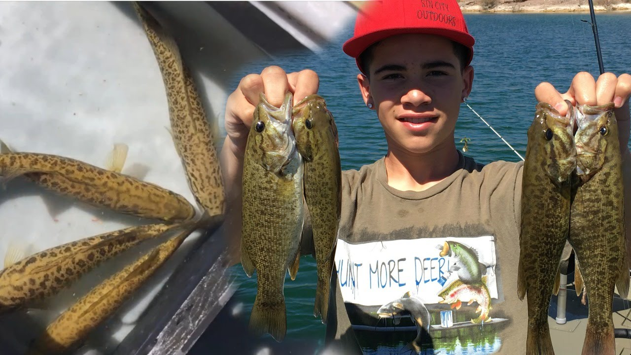 Fishing for stripers and bass on the colorado river in a for Willow beach fishing