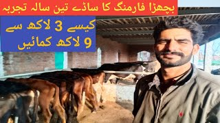 3 years Experience in Cattle Farming|Motivate for Cattle Farm|Business talks official