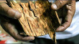 Découverte   La quinine, il y a 200 ans