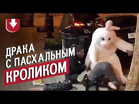 «Пасхальный кролик» из США подрался возле бара и попал на видео