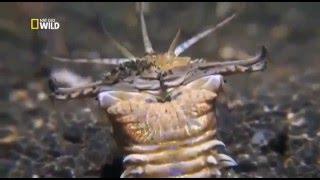 видео Самый длинный морской червяк