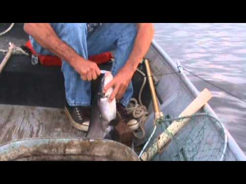 "South Bend's Lunkerville: ""The Catfish Hunters"" PROMO from YouTube · High Definition · Duration:  1 minutes 11 seconds  · 82 views · uploaded on 5/1/2016 · uploaded by South Bend's Lunkerville"