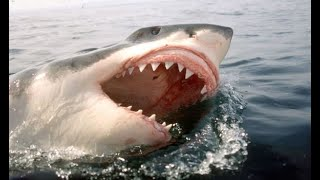On the News| Massive Shark Swimming Towards Couple| Cá Mập Chào Hello với 2 người