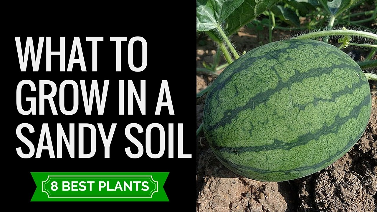 a discussion of whether plants need soil to grow When growing plants in soil, consider the ph of the water going in and the ph of the soil itself both of these readings can be taken with a common glass electrode meter there's no need for a.