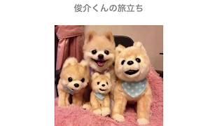 俊介くんの旅立ち 俊介くん 検索動画 29