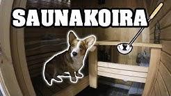 Saunakoira