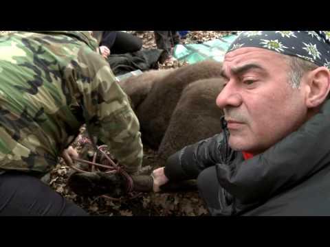 Natură și aventură - Situația zimbrilor din Parcul Natural Vânători Neamț
