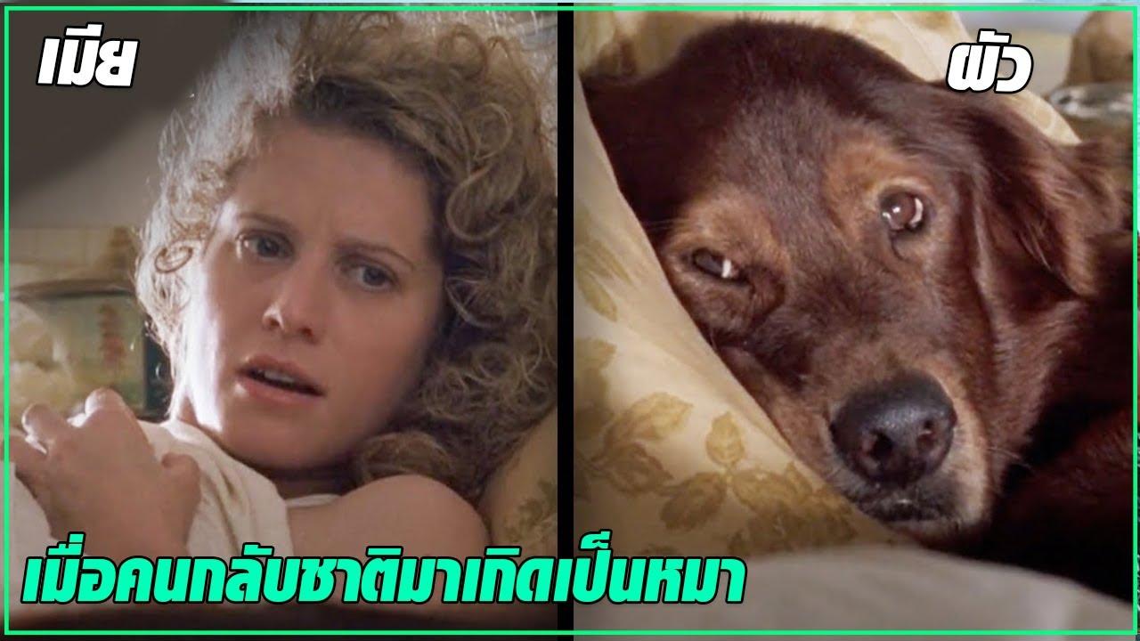 ตื่นขึ้นมาก็พบว่า ตัวเองกลายเป็นหมา แถมเมียก็มีผัวใหม่ l สปอยหนัง