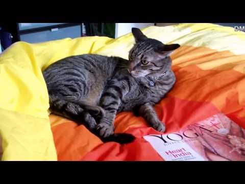 Stupid cat / КОТ ДЕБИЛ