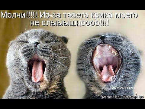 картинки с котята прикольными надписями и приколы 2016 октябрь