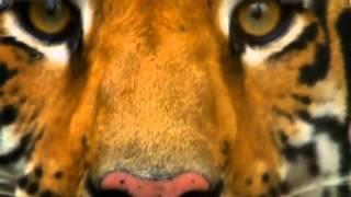 Whoniverse 2013: Хищники. Animal planet