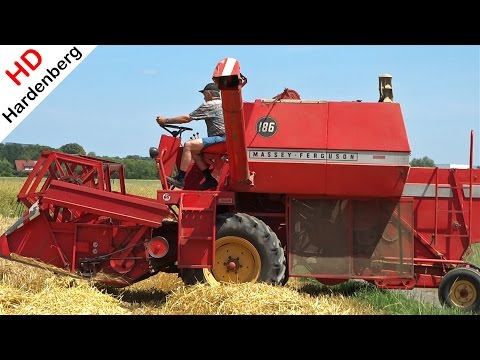 Massey Ferguson 186 | Harvesting First Grain | Barley | Sauerland | Germany | 2014.