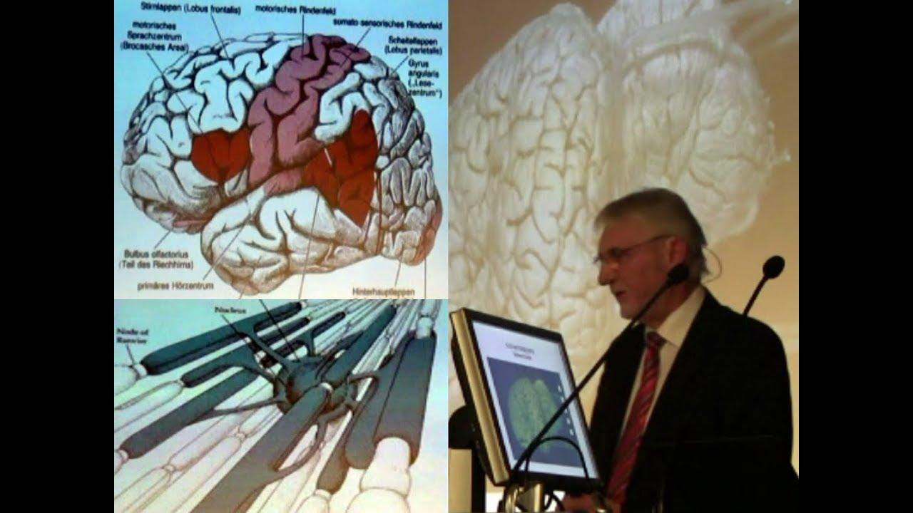 Das Gehirn (2) | Wie einzigartig ist der Mensch? (6) - YouTube