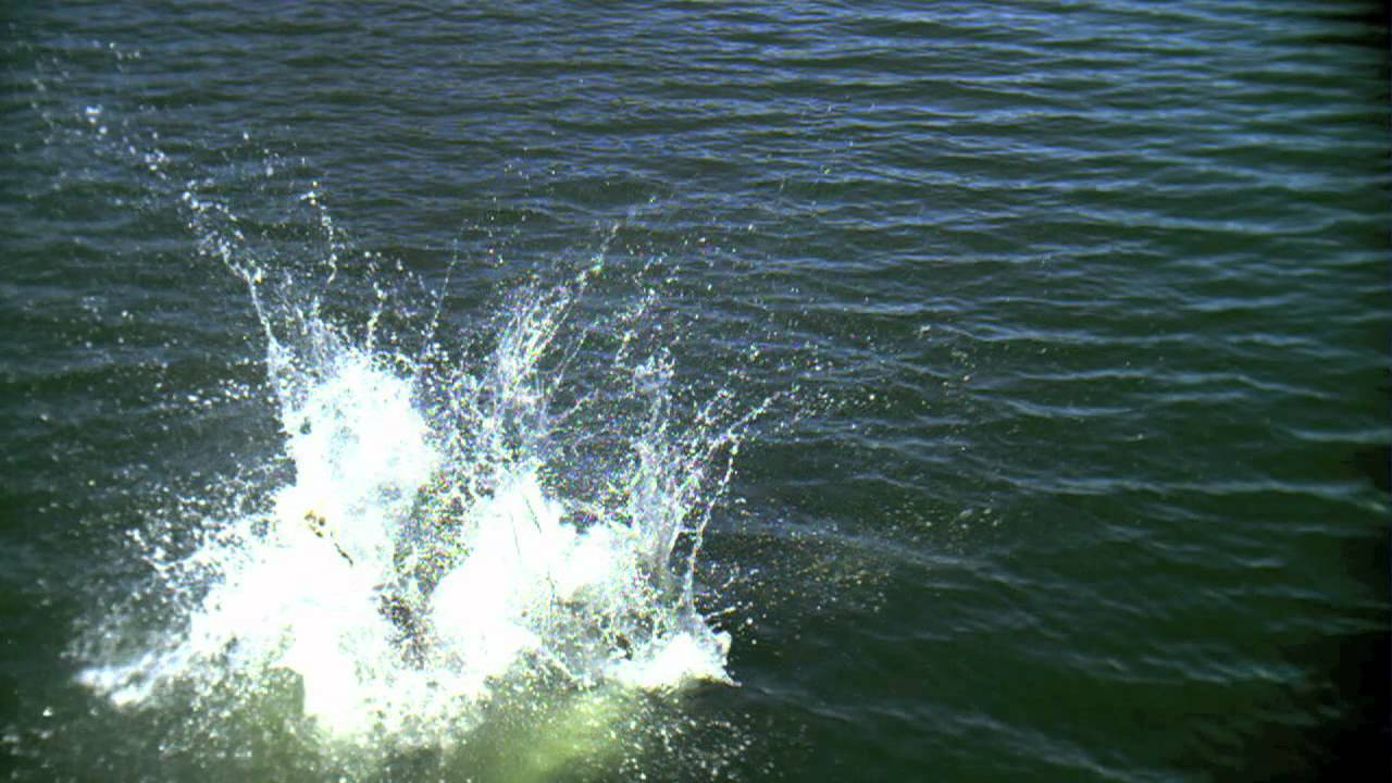 Girl Jumping into Water in High Speed