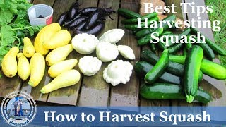 HD How To Harvest and Cook Squash