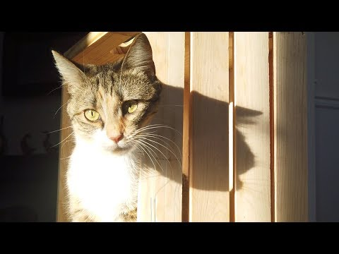 Cats and Kittens in a Sunspot