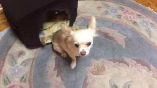Как правильно обустроить место для собаки
