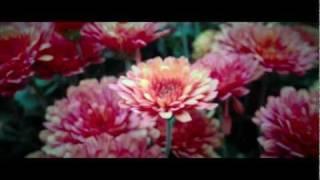 iPhone 4S 8MP Camera Test (1080p)