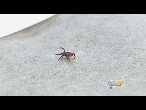 Pennsylvania Leads Country With Highest Number Of Lyme Disease Cases