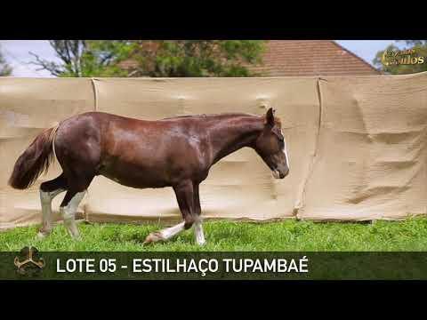 LOTE 05   ESTILHACO TUPAMBAÉ