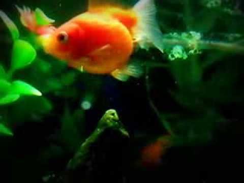 Как рыбка какает...(документальное видео)