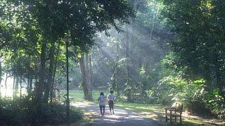 Never-ending Story(ep202) - Bukit Batok Nature Park 5 May 2015