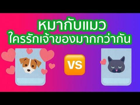 หมากับแมว ใครรักเจ้าของมากกว่ากัน? | รู้หรือไม่ - DYK - วันที่ 24 Aug 2018