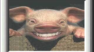 Pig Singing Happy Birthday.wmv