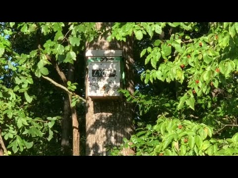 Layens Swarm Hive Transfer on the Lyon Property