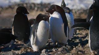 'Penguins' filmmakers on finding a rock-n-roll penguin lead, promoting conservation