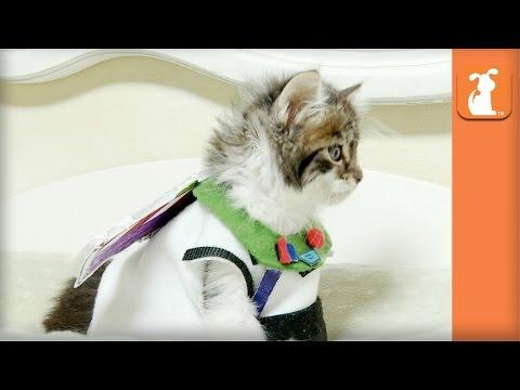 Best Kitten Videos 2014 (CUTE COMPILATION!)