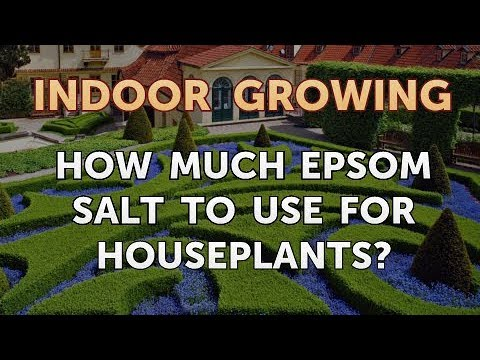 How Much Epsom Salt To Use For Houseplants?