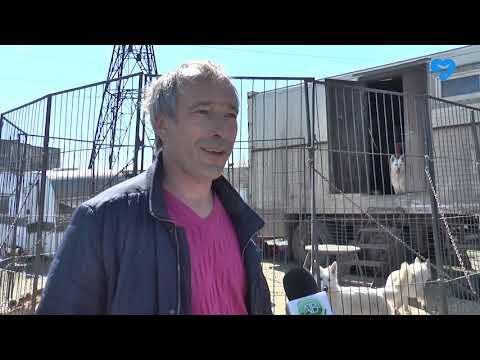Львица и крокодилы в Ахтубинске (08.04.2020)