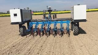 Robotické plečkování kukuřice - polní robot Robotti