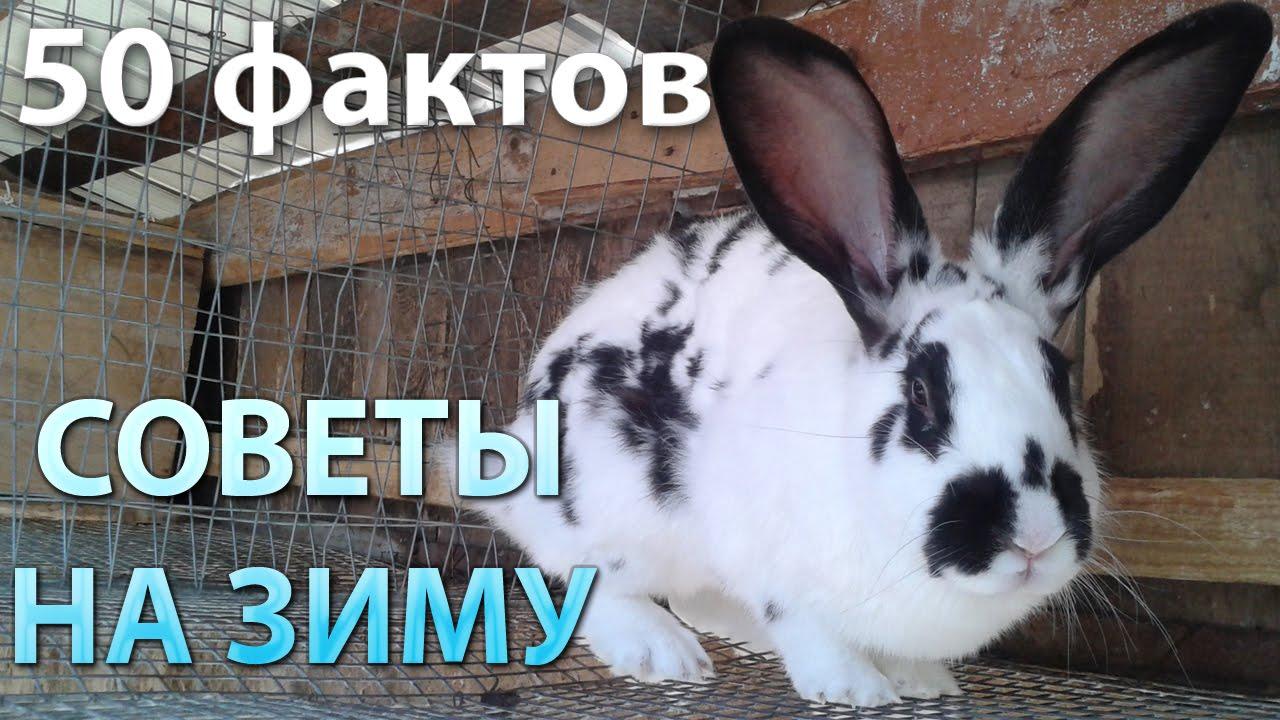 Содержание кроликов зимой – 50 фактов о кролиководстве!