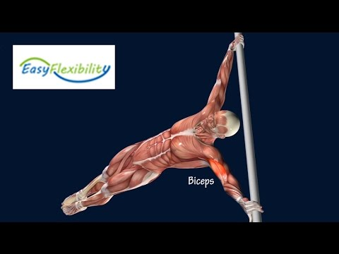 how to human flag progression tutorial muscle animation, Muscles