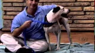 Pets On Parade Segment 4  - Channel 3 AZ. 09-24-11