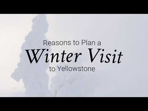 Reasons to Visit Yellowstone in the Winter