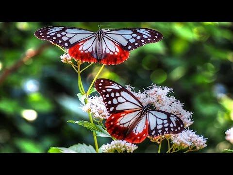 Just beautiful photos of Butterflies
