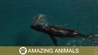 Newborn Whale Takes First Breaths