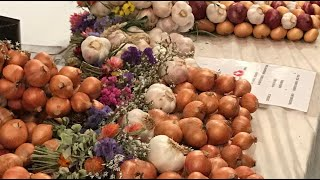 A 360-degree visit to Bern's onion market