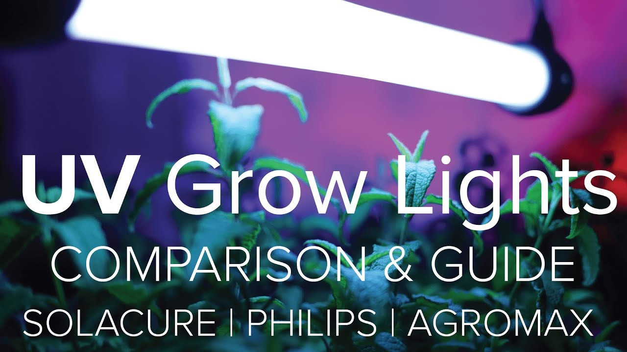 Uv Grow Light Comparison Uv Grow Light Guide Solacure Philips Agomax Youtube