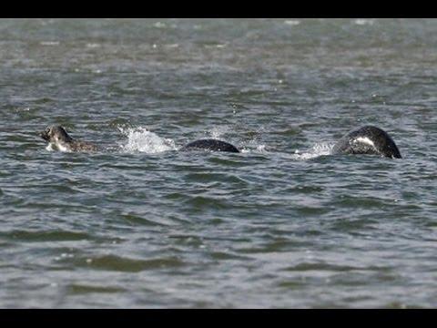 Monstruo del lago Ness, Nueva foto de su posible ... Real Sightings Of Monsters