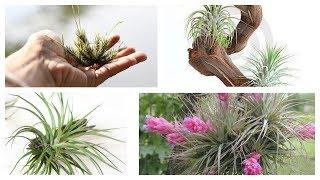 Ideias Criativas com Plantas