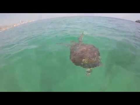 GoPro   Travel to Snoopy Island - Sharks, Turtles, Cuttlefish, Moray