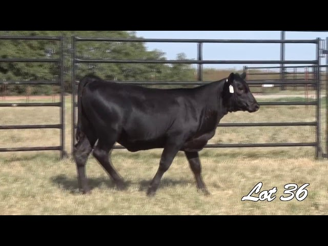 Pollard Farms Lot 36