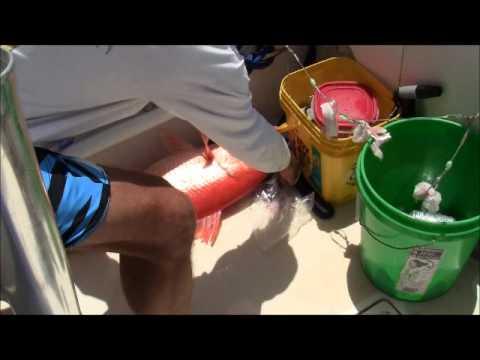 Deep Drop fishing the Abacos Aug 2012
