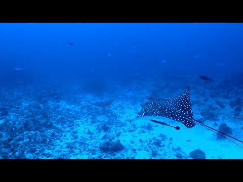 Palau (Mar 2017)