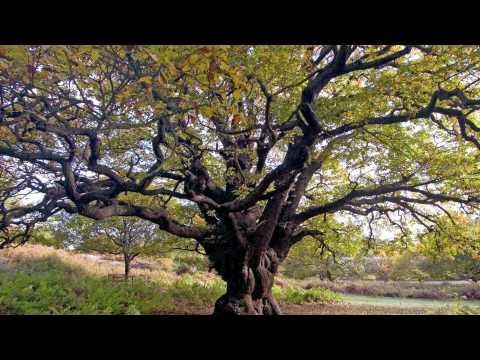 Alien Fashion Show - Oak Tree